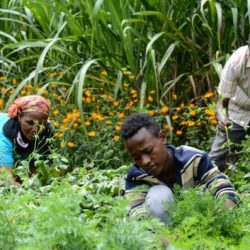 A family in Ethiopia works in their garden.